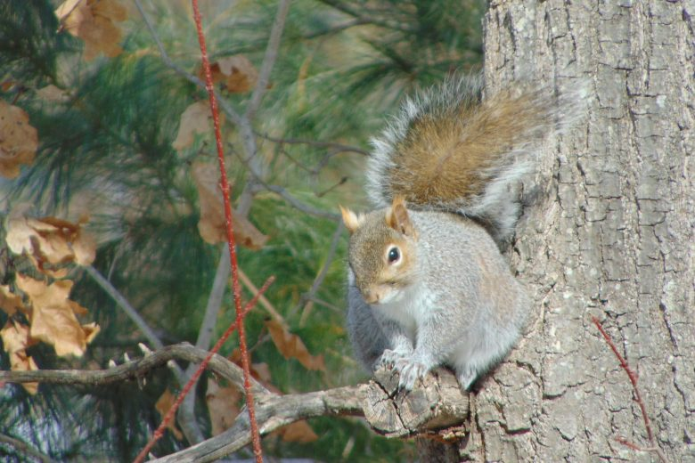 Squirrel March 2019